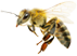 , Homepage Honey Slider